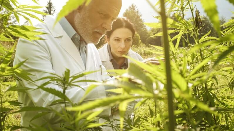 vente cannabis thérapeutique en ligne