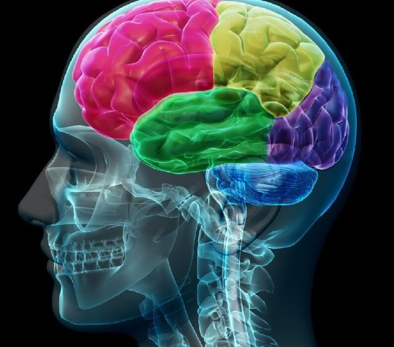 bienfaits du cbd sur notre cerveau